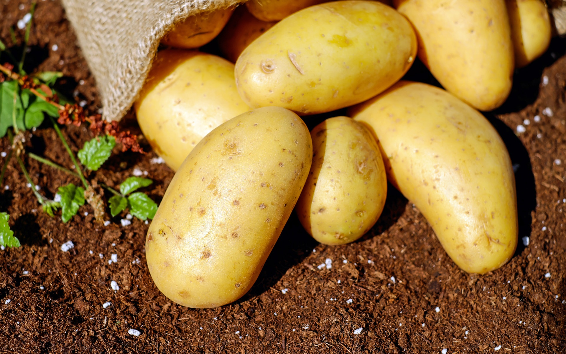 Seed Potatoes | The One Stop Garden Shop