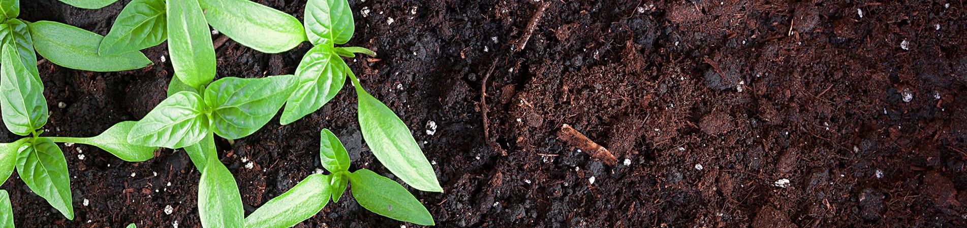 Compost - 55 cm