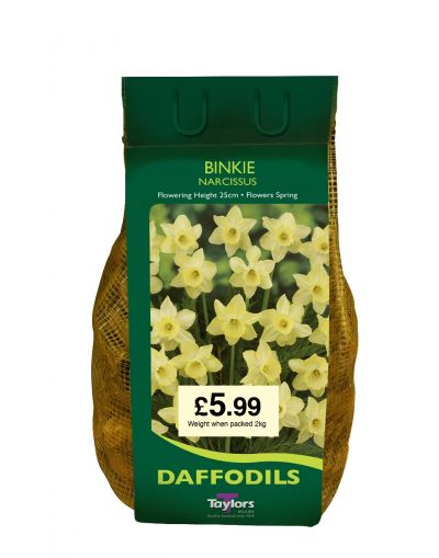 Taylors Bulbs Narcissus Binkie 2KG