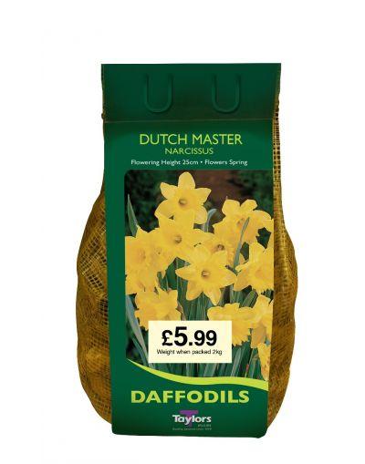 Taylors Bulbs Narcissus Dutch Master 2KG