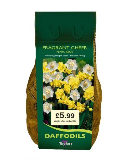 Taylors Bulbs Narcissus Fragrant Cheer 2KG