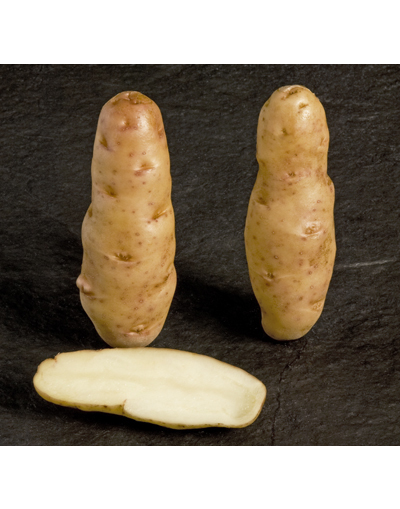 Taylors Bulbs Albert Bartlett Anya Seed Potatoes 2KG Pack