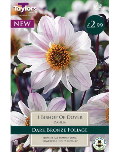 Taylors Bulbs Dahlia Bishop of Dover 1 Tuber Pre-Pack