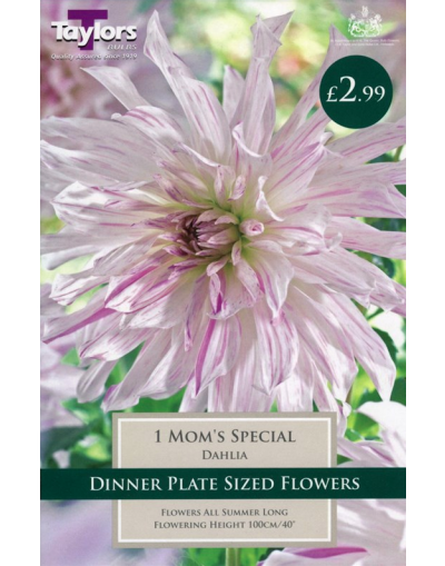 Taylors Bulbs Dahlia Mom's Special 1 Tuber Pre-Pack