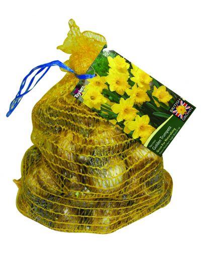 Taylors Bulbs Narcissus Golden Trumpets Net (30)