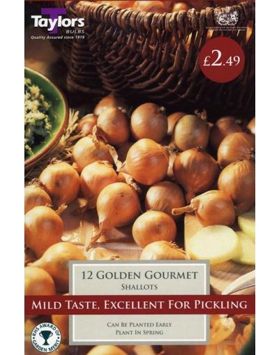 Taylors Bulbs 12 Golden Gourmet Shallots Pre-Pack