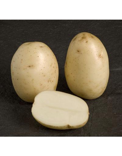 Harmony Seed Potatoes 1KG