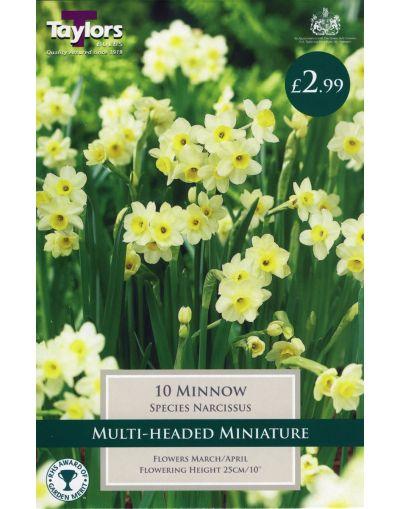 Taylors Bulbs Narcissus Minnow P/P (10)