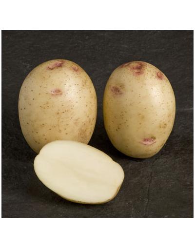 Taylors Bulbs Albert Bartlett Osprey Seed Potatoes 2KG Pack