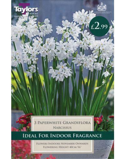 Taylors Bulbs Narcissus Paperwhite Grandiflora P/P (3)