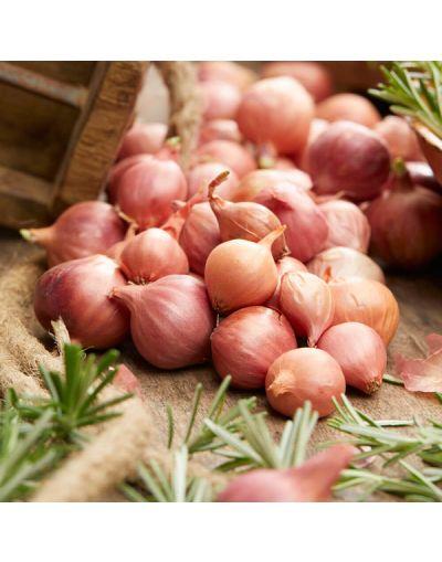 Taylors Bulbs Loose Sturon Onion Sets 14/21 200G