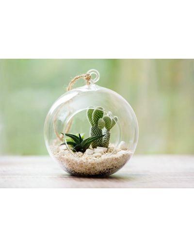 Plantpak Large Glass Globe Terrarium