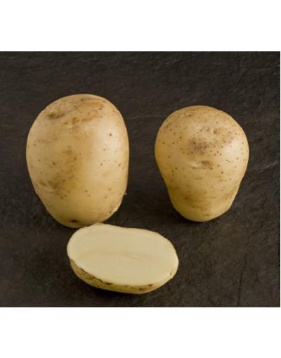 Taylors Bulbs Albert Bartlett Vivaldi Seed Potatoes 2KG Pack