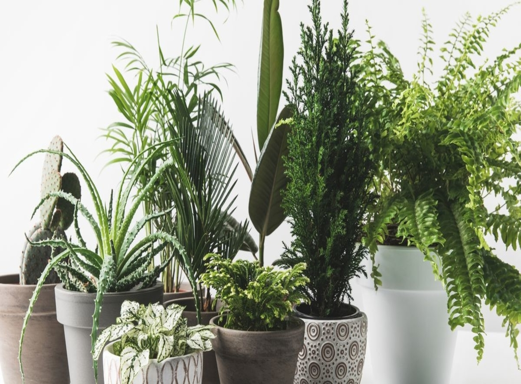 Say Aloe to Houseplants!