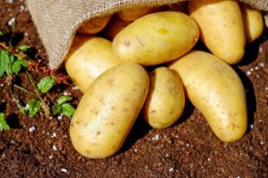 Potatoes in Hessian Sack